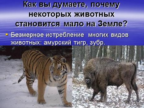Красная книга россии млекопитающие