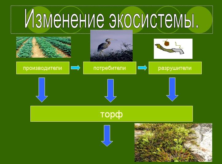 Конспект урока экосистема болота с презентацией