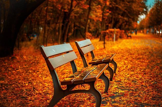 Осенний бал для старшеклассников - скамья парк осень листья желтые дорожка в листве багряной